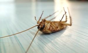 Рейтинг лучших средств от тараканов в квартире и доме